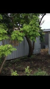 FREE SHED Balga Stirling Area Preview