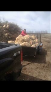 Dump Runs & Yard Waste Removal  (Flat Rates) Kawartha Lakes Peterborough Area image 1