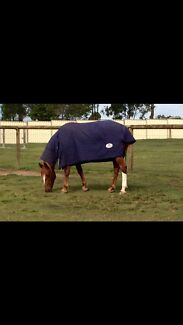 Stunning QH X Lowood Somerset Area Preview