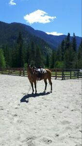 Package deal! QH mare and part arab red dun tobiano filly!