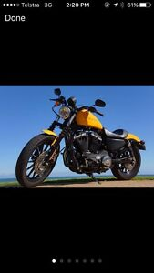 2011 Harley Davidson Iron - be quick!! Mount Lawley Stirling Area Preview