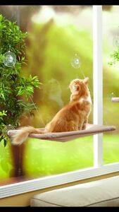Sunny window seat for cats or small dog!
