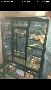 Huge flight cage with 2 zebra finches