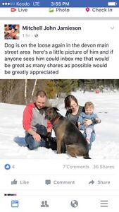 Lost family dog