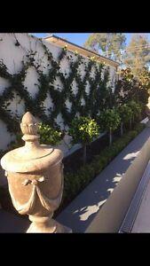 Landscaping, Garden maintenance, lawn mowing Camden Camden Area Preview