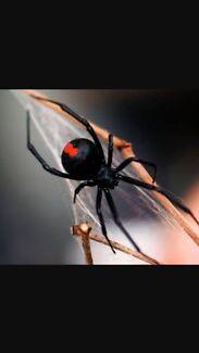$80 Pest Control Strathfield area.
