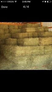 Square bales of horse hay