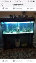 4ft fish tank Gloucester Gloucester Area Preview