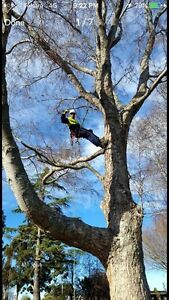 PERTHS TREE WORKS / TREE CLIMBER/ MULCHING Jindalee Wanneroo Area Preview