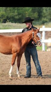 Great kid safe horse for sale