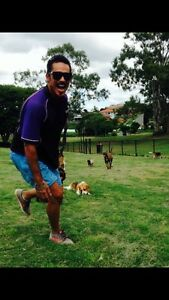 DOGGY SOCIAL OUTINGS Bulimba Brisbane South East Preview
