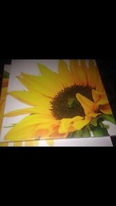 2 sunflower pictures