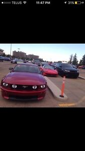 2007 FORD MUSTANG CALIFORNIA SPECIAL (mint)