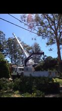 Tree services Sylvania Sutherland Area Preview