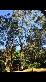 Tree lopping/ removal