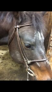Rolled leather english bridle