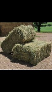 Second cut small hay bales