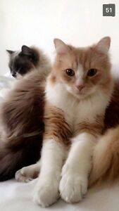 Need someone to adopt or look after my two cats:) will pay