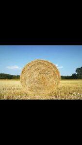 Oat straw bales