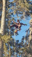 Tree Removal/ Pruning