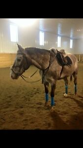 Horse for half lease near Airdrie