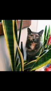 Cat missing Breithaupt park area