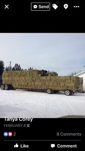 Squares bales of horse hay
