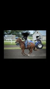 5 year old mare