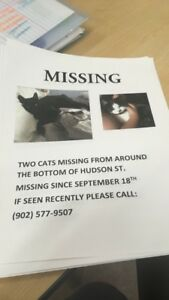 MISSING cats in New Waterford