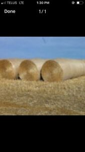 WHEAT STRAW FORSALE