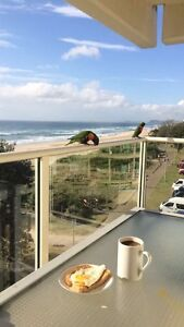 Beachfront flat 2 rooms available immediately Broadbeach Gold Coast City Preview