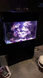65 gallon saltwater tank with sump $250 OBO