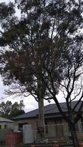 Tree removal, palm removal, tree pruning, palm pruning, tree felling Adelaide CBD Adelaide City Preview