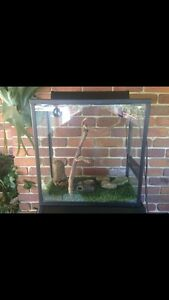Reptile enclosure Highland Park Gold Coast City Preview