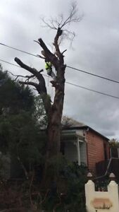 Elco tree services & Rubbish removal Burwood Burwood Area Preview