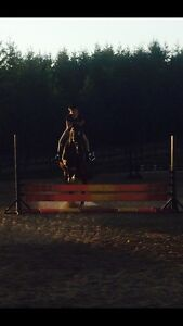 LF Horse/Pony To (Part) Lease Near Brussels ASAP