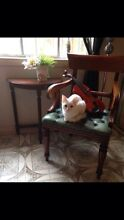 KITTEN - WHITE (m) 11 months old - vaccinated Annandale Leichhardt Area Preview