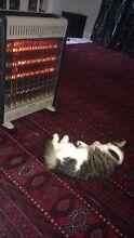 2 free kittens Amaroo Gungahlin Area Preview