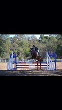 Honour desperately needs a new home Karnup Rockingham Area Preview