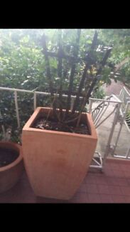 Tall square terracotta pot with soil and plant Charlestown Lake Macquarie Area Preview