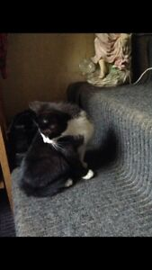 Cats & Kittens need rehoming