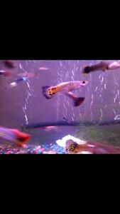 Wanted: guppies, gravel, beneficial bacteria, live plants