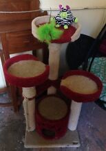 Cat scratch Post Annandale Leichhardt Area Preview