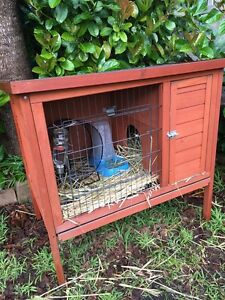 Guinea Pig outdoor  hutch and inside pen Cammeray North Sydney Area Preview