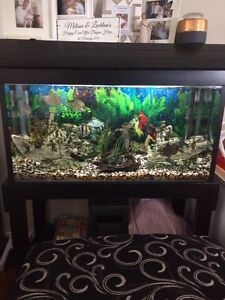 Fish tank for sale Blacktown Blacktown Area Preview