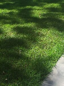 Lawn mowing Business Tweed Heads South Tweed Heads Area Preview