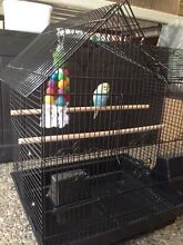 NEW !!! Large Bird Cage - $55each Helensvale Gold Coast North Preview