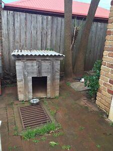 Dog kennel Devonport Devonport Area Preview