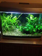Curved glass planted aquarium Launceston Launceston Area Preview