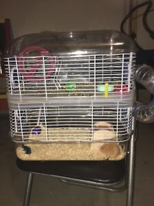 2 Female rats Seaford Meadows Morphett Vale Area Preview